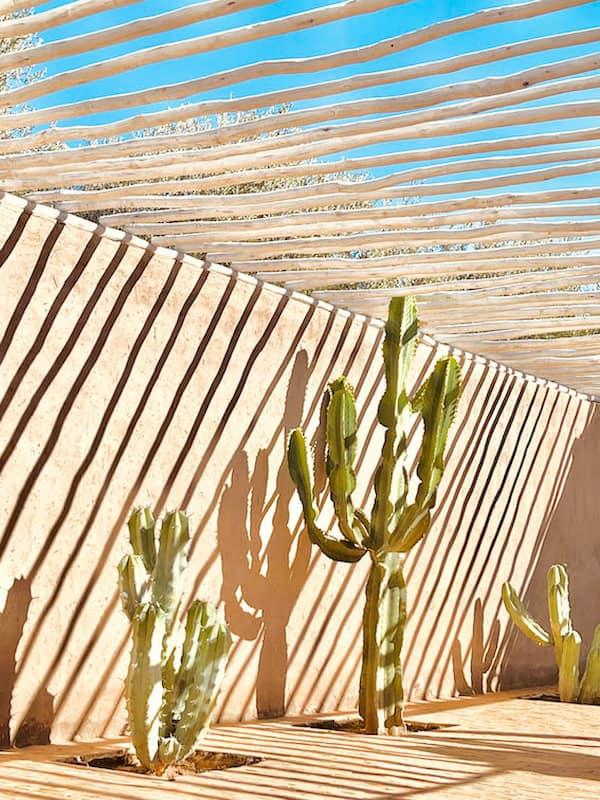 Cactus d'une villa de location à Marrakech