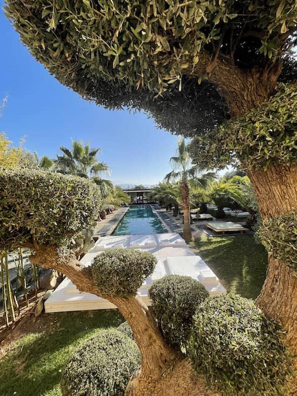 Olivier donnant sur la piscine et le jacuzzi de la Villa Taj Marrakech